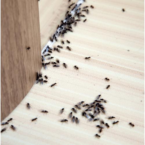 Ant Control Caldicot