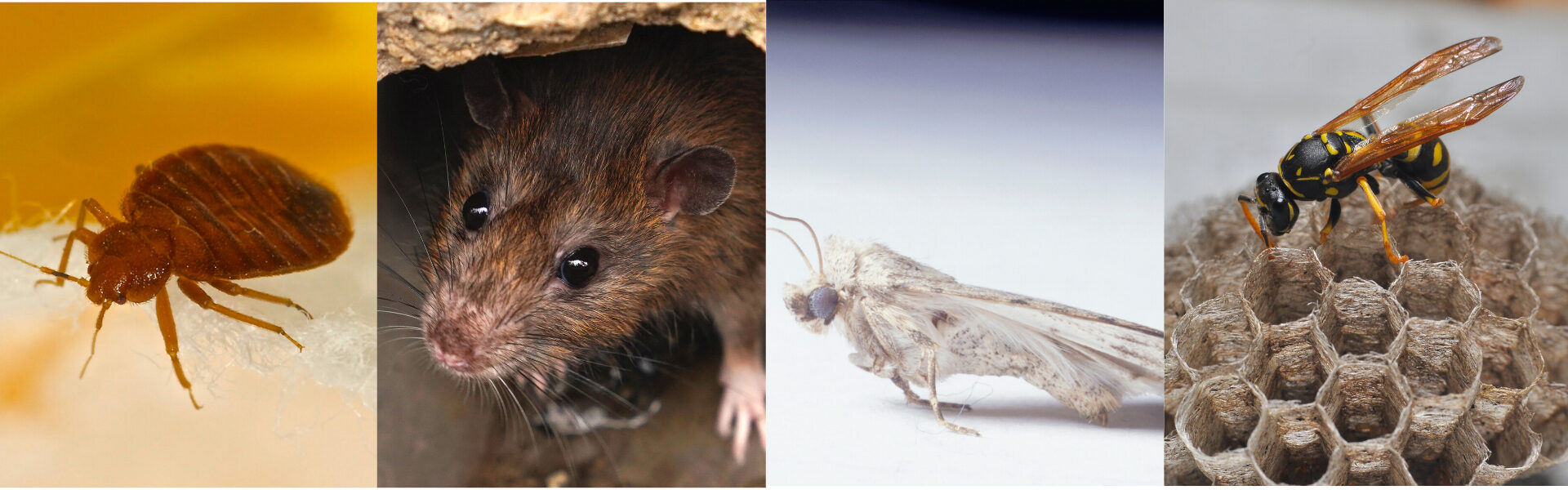 Pest Control in South Wales